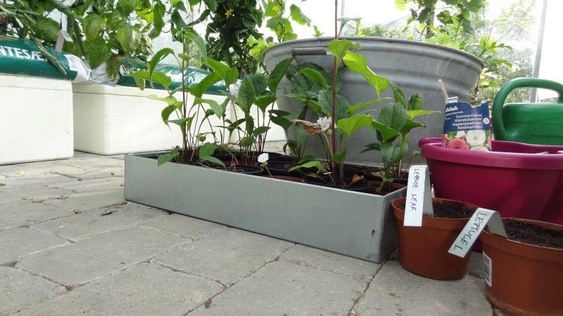 Smarte plantekasser med espalier til dig